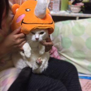 【ねこっちのマルっち②】