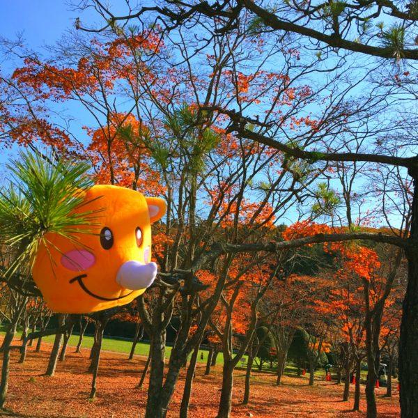 ツノっちな秋💖 宙に浮いちゃってぇ💖