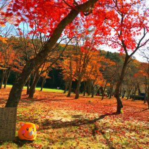 黄昏ツノっち〜紅葉と同化〜 すっかり秋になりました💖 真っ赤な絨毯にツノっちも黄昏てます